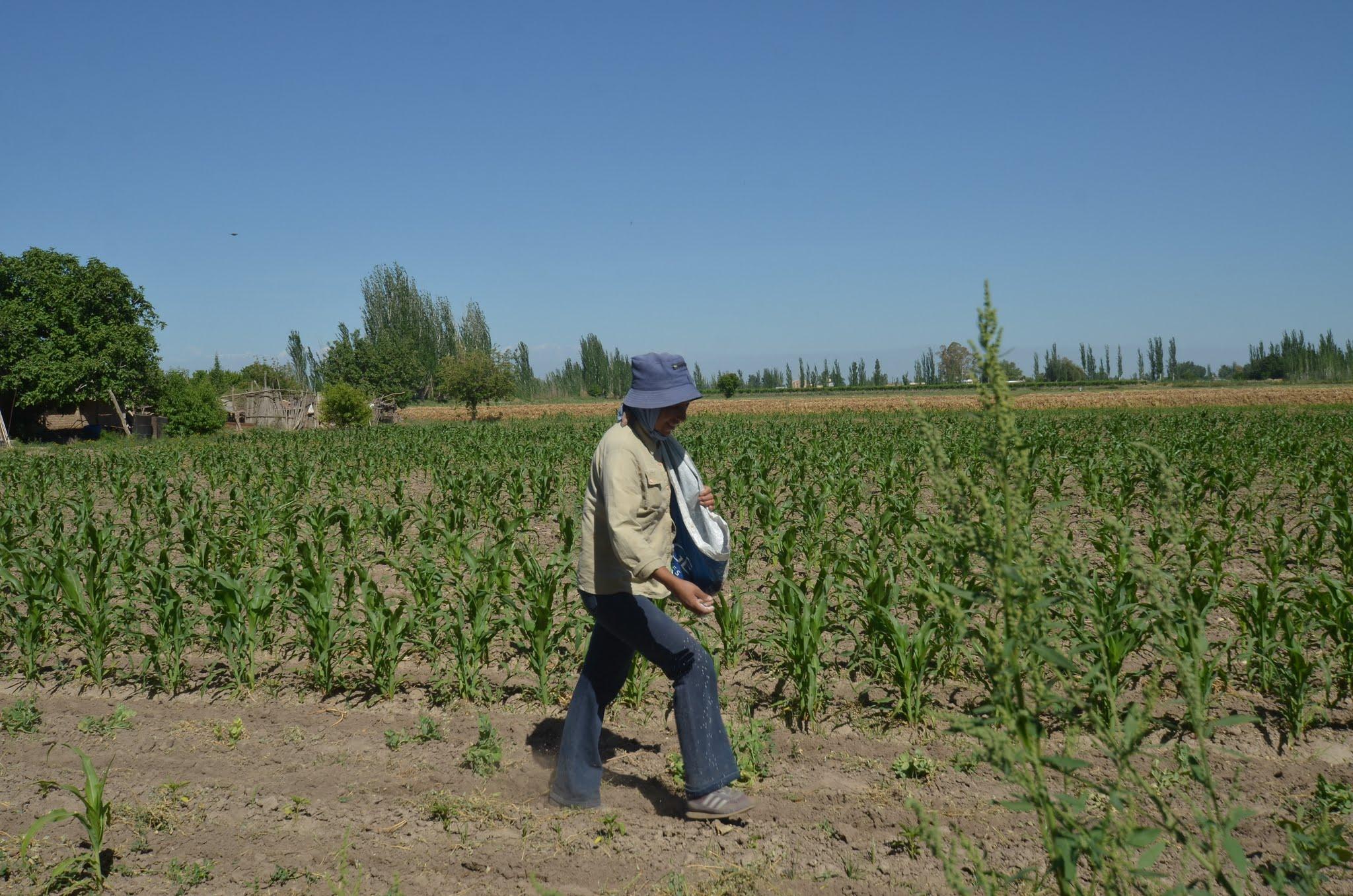 Seguro agrícola: hasta el 16 de setiembre se podrán adherir los productores