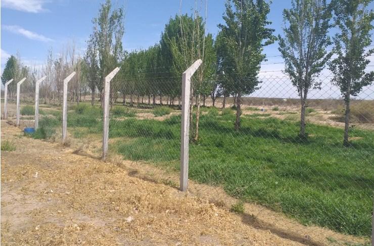 Tunuyán Inferior: Irrigación promueve el reúso para reforestar zonas áridas